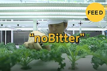 noBitter ฟาร์มผักขนาดเล็กใจกลางสยาม แนวคิดสร้างแหล่งผลิตอาหารให้คนเมือง