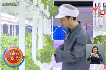 สร้างความมั่นคงทางอาหารด้วยผักปลอดสารเพื่อคนเมือง