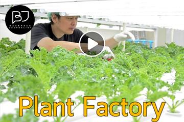 เศรษฐกิจเกิดใหม่ Plant Factory โรงผลิตพืชแห่งอนาคต